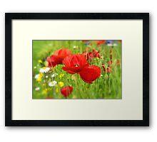 Red Poppy flowers. Framed Print
