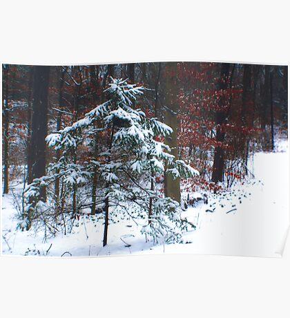 Snowy Little Fir Poster