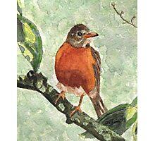 North American Robin Photographic Print