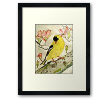 A Goldfinch Spring Framed Print