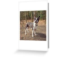 Meryl, the Boston Terrier Greeting Card