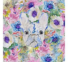 Abstract French bulldog floral watercolor paint Photographic Print