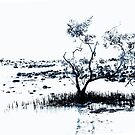 Mangrove Tree.....Tropical North Queensland by Imi Koetz
