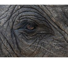Elephant - Africa Photographic Print