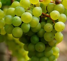 Green Grapes by Sabine Edrissi