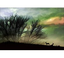 Alone On A Hill Photographic Print