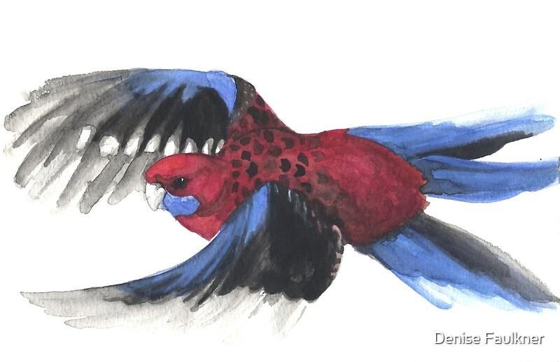 Crimson Rosella In Flight By Denise Faulkner Redbubble