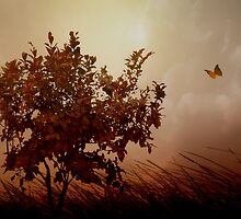 Autumn Serenity by TOM YORK