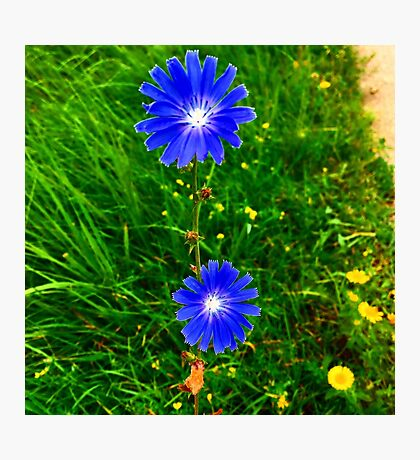 Blue insane Photographic Print