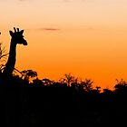 Giraffes in the African Sunset by Marylou Badeaux