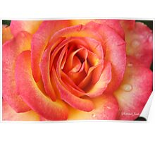Celebrate Joy with a Perfect Rose! Poster