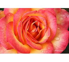 Celebrate Joy with a Perfect Rose! Photographic Print