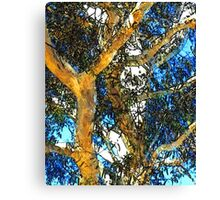Gumtree Dreaming Canvas Print
