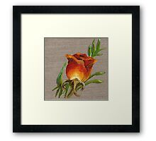 Orange Rose Oil Painting Framed Print