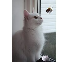 WONDERING..NOW HOW DID HE GET IN HERE? CAT & UNWANTED GUESTS > PICTURE AND OR CARD Photographic Print