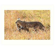 Serval Cat & Kitten, Serengeti, Tanzania  Art Print