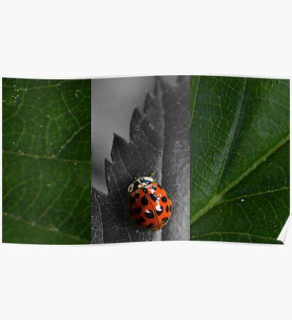 Ladybug Triptych Poster