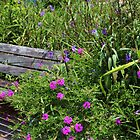 Beauty Around The Bench by Cynthia48