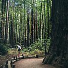 Lost in the woods (Armstrong Redwoods) by Hotaik  Sung