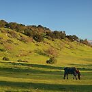Rolling hills near stanford by Hotaik  Sung