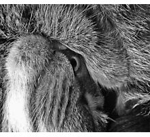 Nose or Eye Photographic Print