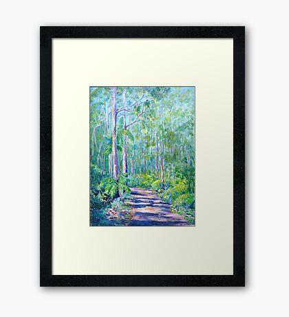 Carricks Road Springbrook  Framed Print