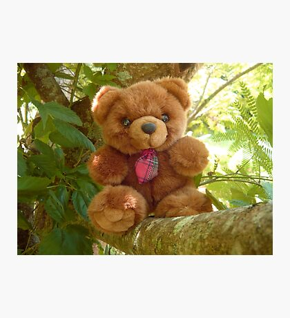 Red Tie Teddy Bear Photographic Print