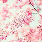 Cherry blossoms on white sky by Caroline Mint