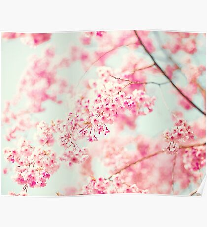 Cherry blossoms on white sky Poster