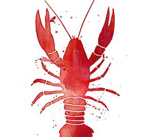Watercolor Red Lobster by junkydotcom
