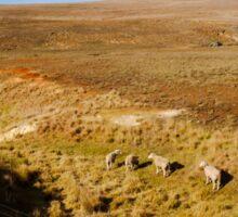 Finding Green Grass - Rural Australia Sticker