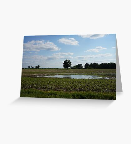 Tree in the middle of a field  Greeting Card