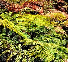 Forest Ferns by Sally Murray