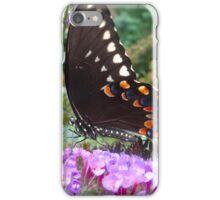 Spice Bush Swallowtail Butterfly iPhone Case/Skin