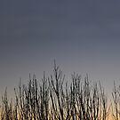 Dawn Branch Silhouette by Coralie Plozza