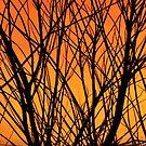 Fiery Silhouette by Coralie Plozza