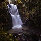 Berry creek falls in big basin redwoods state park by Hotaik  Sung