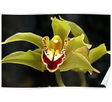 Wonderful Green Orchid Poster