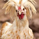 Bad Hair Day Rooster Art Print, Pillow, T-shirt, Hoodie, Tote Bag, iPhone Case, Samsung Galaxy Case, iPad Case by Kgphotographics