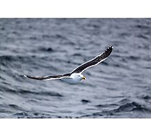 Flying Gull Photographic Print