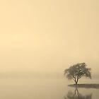 one tree's island by dc witmer