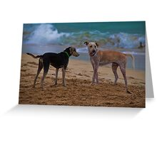 Panama. Bocas del Toro. Red Frog Beach. Two dogs. Greeting Card