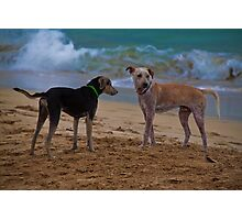 Panama. Bocas del Toro. Red Frog Beach. Two dogs. Photographic Print