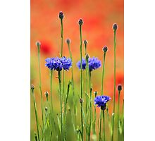 Sapphires and Rubies Photographic Print