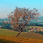 Tree on indian summer afternoon | landscape photography by Patrick Jobst