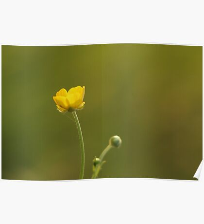 A yellow flower and one to come Poster