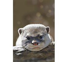 Otter Photographic Print