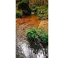 Little stream in autumn colors | landscape photography Photographic Print