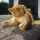 Ginger cat licking fur on patio by turniptowers