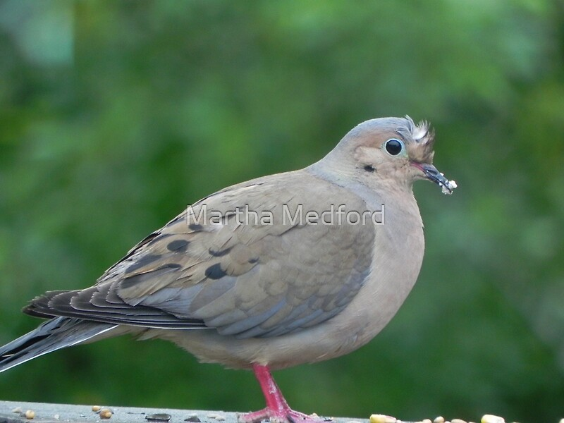 """Mourning Dove"" by Martha Medford 